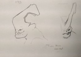 Two Horn Concept 11